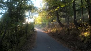 bosco 4 strade