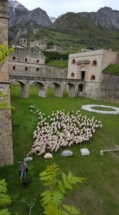 pecorefortevinadio
